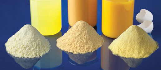 Pasteurized spray-dried egg powders powdered eggs